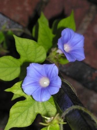 flower-e1536453207494.jpg